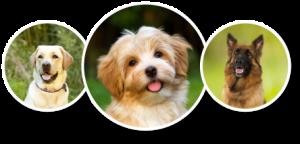 dog_circles